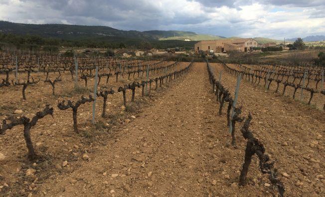 Active vineyard site in the Penedès (Catalonia, Spain).