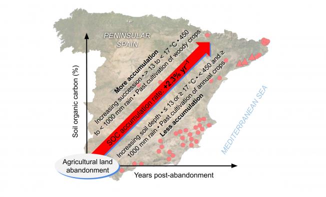 Factors influencing soil organic carbon accumulation in Peninsular Spain.